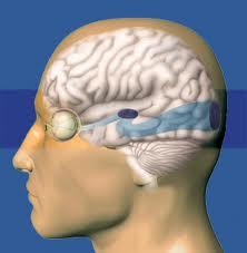 Ruta neuronal de la información visual