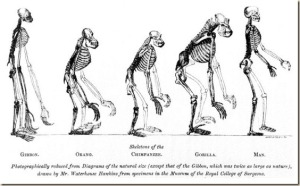 Bipedestación Del Homo Sapiens