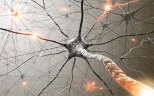 Neuronas, sustrato cerebral para las actividades cognitivas