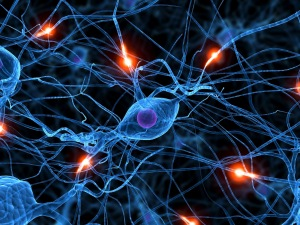 Sinapsis, redes neuronales y bio-información