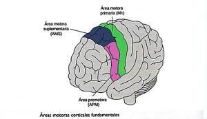 Área de motora