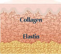 Colagena y elastina