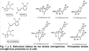 Estructura básica de los ácidos clorogénicos