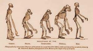 La bipedestació, Huxley evolucion
