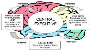Modelo de memoria de trabajo
