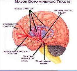 Sistema dopaminérgico