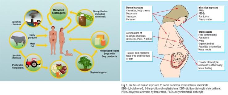 Disruptores endocrinos, unas sustancias químicas empleadas masivamente