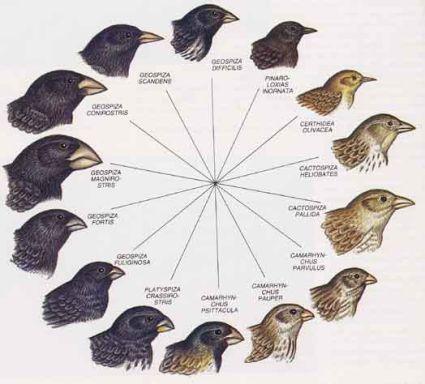 Tipos de selección natural